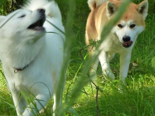 Bilder von Yuki & Saiko